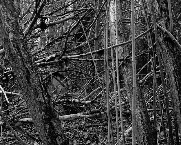 Wald Gestruepp Mecklenburg Alt Jassewitz