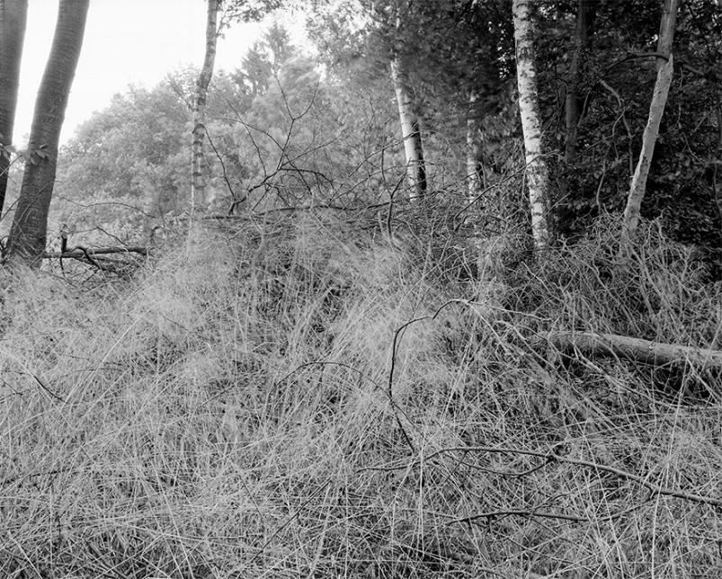 Jassewitzer Busch, Alt Jassewitz, Mecklenburg-Vorpommern, Wald